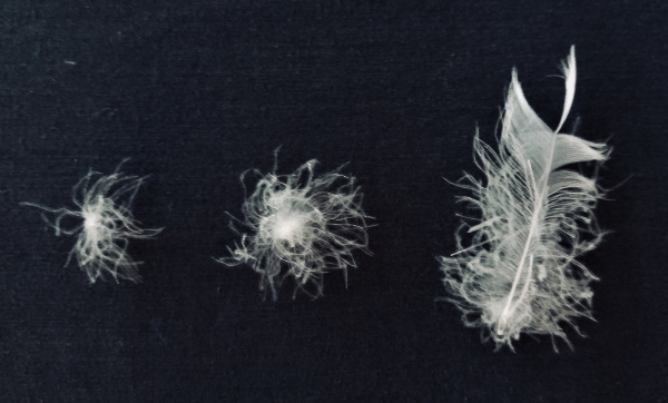 down feathers compared to normal feathers for duvet inners